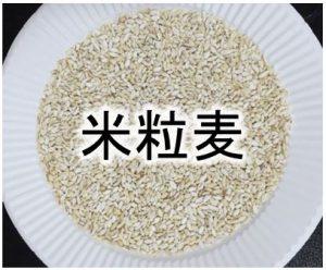 米粒麦(大麦)