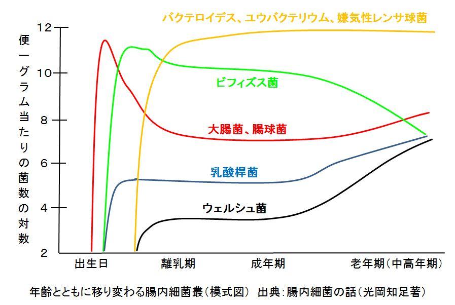 腸内細菌叢の年齢による変化