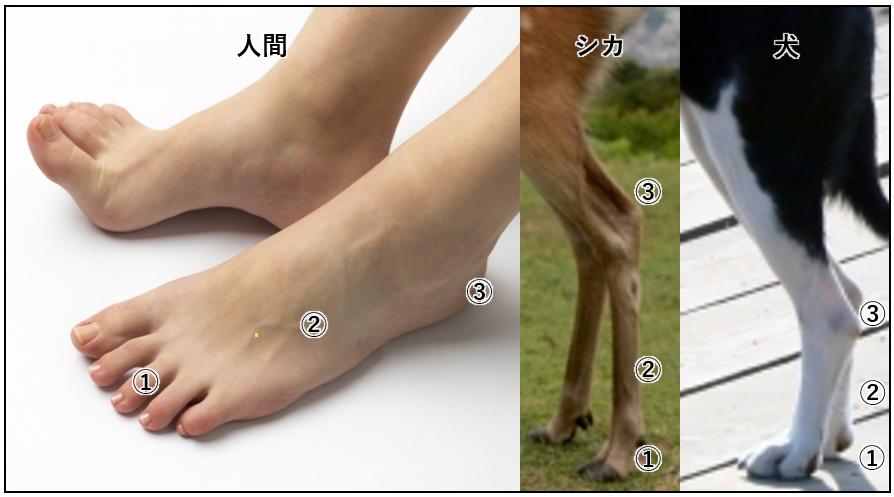 足指・踵 位置比較