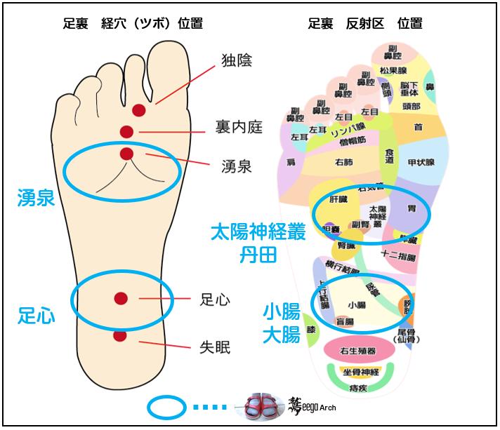 ワシーガアーチの突起が刺激する足裏の経穴(ツボ)・反射区