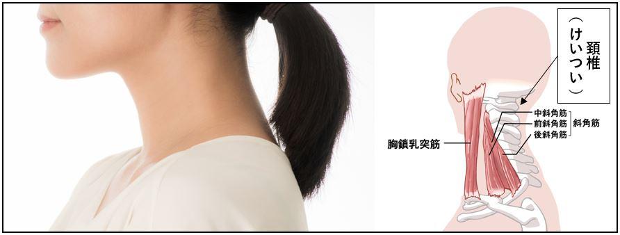 頚部(首回り)強化・ケアサポートギア「ワシーガ・ネック」今冬発売