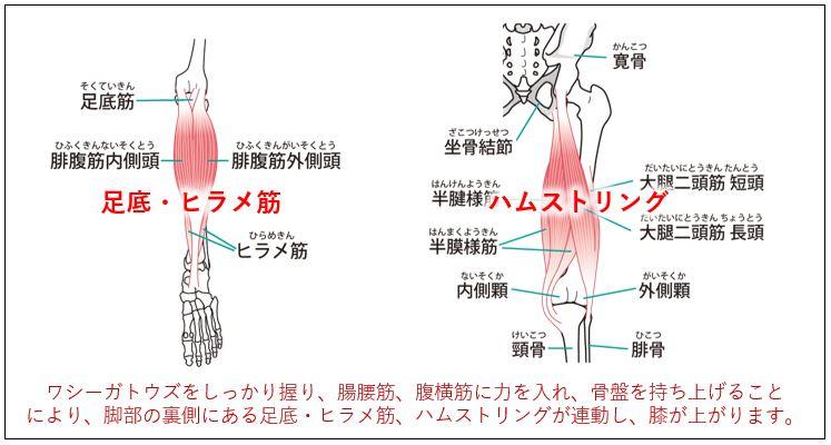 ワシーガトウズ 下腹部インナーマッスル強化メゾット図解メカニズム